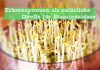 Erbsensprossen Diaminoxidase Histaminintoleranz